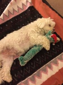 Kuku bluedog