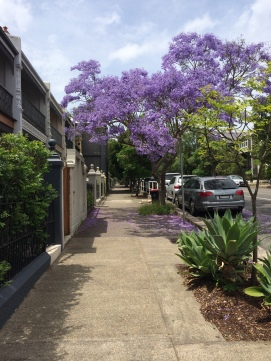 A gorgeous Jacaranda punctuates the street