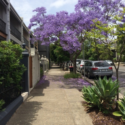 A gorgeous Jacaranda punctuates the street
