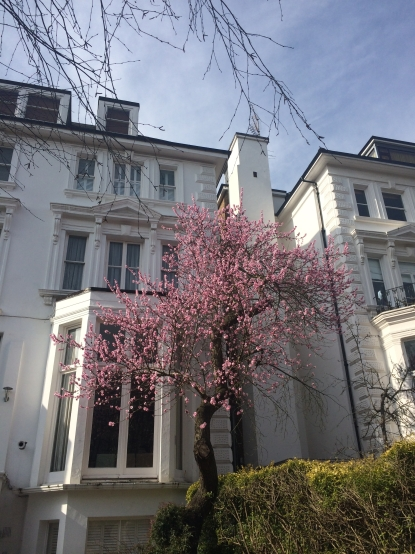 A typical block in Belsize Park